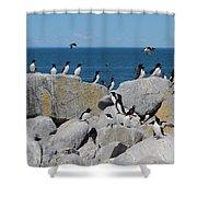 Auk Island Shower Curtain