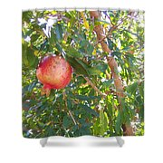 Aunt Tissy's Pomegranate Tree  Shower Curtain