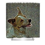 Australian Cattle Dog Mix Shower Curtain