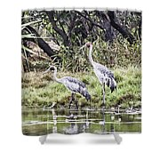 Australian Cranes At The Billabong Shower Curtain