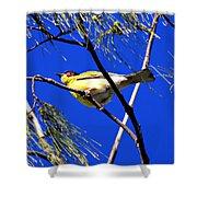 Australian Figbird Shower Curtain