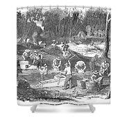 Australian Gold Rush, 1851 Shower Curtain