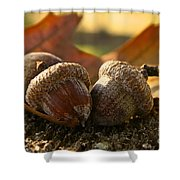Autumn Acorns Shower Curtain