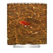 Autumn Afloat Shower Curtain by Rachel Cohen