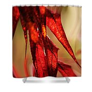 Autumn Afternoons... Shower Curtain