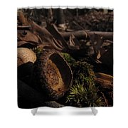 Autumn And Acorns Shower Curtain