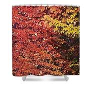 Autumn Arrival Shower Curtain