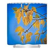 Autumn Aspen Leaves And Blue Sky Shower Curtain