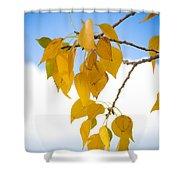 Autumn Aspen Leaves Shower Curtain
