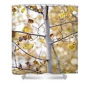Autumn Aspens Shower Curtain