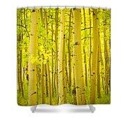 Autumn Aspens Vertical Image  Shower Curtain