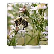 Autumn Bumblebee And Flowers Shower Curtain