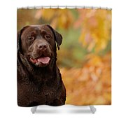 Autumn Chocolate Shower Curtain