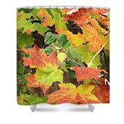 Autumn Collage Shower Curtain