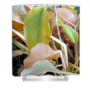 Autumn Composition Two Shower Curtain