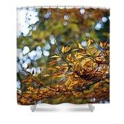 Autumn Crescendo Shower Curtain