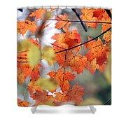 Autumn Day Dream Shower Curtain