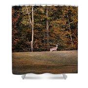 Autumn Deer Shower Curtain