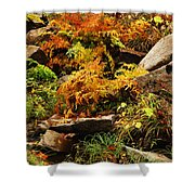Autumn Ferns On Pickle Creek At Hawn State Park Shower Curtain
