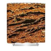 Autumn Forest Floor Shower Curtain
