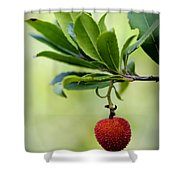 Autumn Fruits In Red Shower Curtain