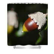 autumn fruits - Mediterranean acorn macro Shower Curtain