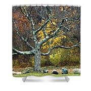 Autumn Grandfather Tree 2 Shower Curtain