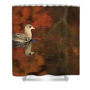 Autumn Gull Shower Curtain