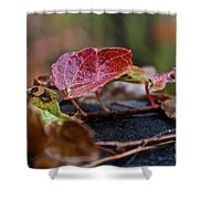 Autumn Ivy In Red Shower Curtain