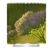 Autumn Joy Sedum Shower Curtain