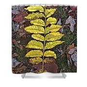 Autumn Leaf Art I Shower Curtain