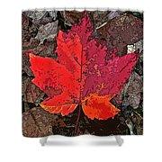Autumn Leaf Art Iv Shower Curtain
