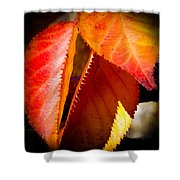 Autumn Leaves II Shower Curtain