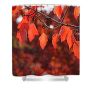 Autumn Leaves In Medford Shower Curtain
