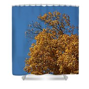 Autumn Leaves In Tn Shower Curtain