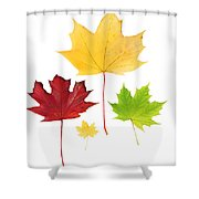 Autumn Leaves Isolated Shower Curtain