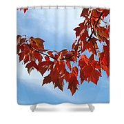 Autumn Leaves Tree Red Orange Art Prints Blue Sky White Clouds Shower Curtain
