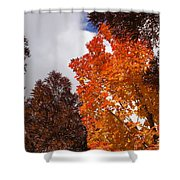 Autumn Looking Up Shower Curtain