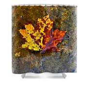 Autumn Maple Leaf In Water Shower Curtain