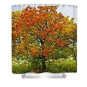 Autumn Maple Tree Shower Curtain