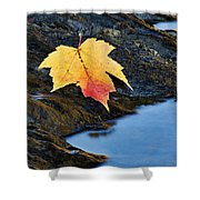 Autumn On The Tellico River - D004558 Shower Curtain