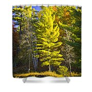 Autumn Scene Of Colorful Trees On The Little Manistee River In Michigan No. 0855 Shower Curtain