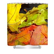 Autumn Spotlight Shower Curtain