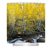 Autumn Stream Iv Shower Curtain
