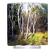 Autumn Sumacs Shower Curtain