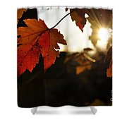 Autumn Sunburst Shower Curtain