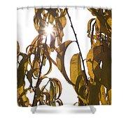 Autumn Sunburst Shower Curtain