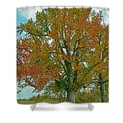 Autumn Sweetgum Tree Shower Curtain
