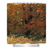 Autumn Tree Shower Curtain