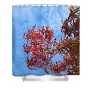 Autumn Trees Art Prints Blue Sky White Clouds Shower Curtain